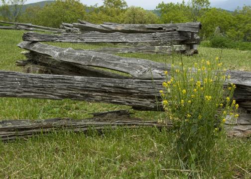 Rail Fence Connecticut - Split Rail Fencing - Wood  PVC